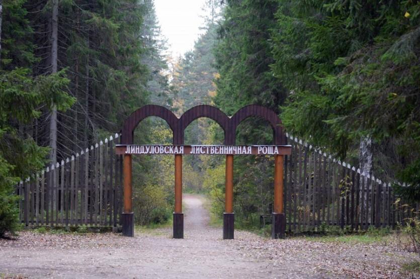 Тайны природы Ленинградской области: от болота Ламмин-Суо к Линдуловской роще